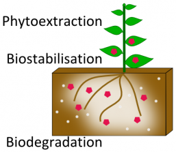 Impacted Soils